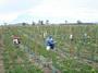 大沢ワインズ ぶどう畑2007年02月01日
