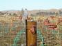 大沢ワインズ ぶどう畑2007年06月06日