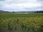 大沢ワインズ 2008年04月08日畑の様子