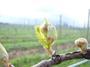 大沢ワインズ 2008年09月10日畑の様子