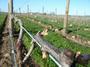 大沢ワインズ 2008年09月26日畑の様子