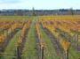 大沢ワインズ 秋色のぶどう畑
