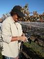 大沢ワインズ 今年最後の葡萄の収穫
