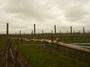大沢ワインズ 2010年09月08日畑の様子