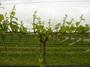 大沢ワインズ 2010年10月27日