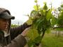 大沢ワインズ 2010年11月05日畑の様子