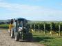 大沢ワインズ 2011年03月20日収穫の様子