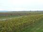 大沢ワインズ 2011年05月10日ブドウ畑の様子