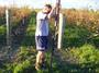 大沢ワインズ 2011年05月19日畑の様子