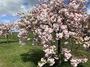 大沢ぶどう園では春も半ばを迎えています。